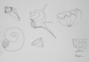 Various Shell Shapes